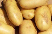 زراعه البطاطس