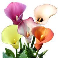 نباتات الزينة