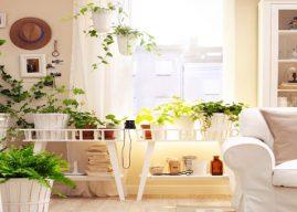12 نوع من النبات لعلاج اضطرابات النوم