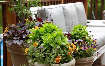 أفضل 1000 نباتات للزراعة داخل حاويات