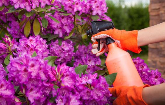 كيفية التخلص من آفات الحديقة