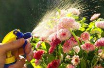 امراض النباتات وعلاجها بالصور